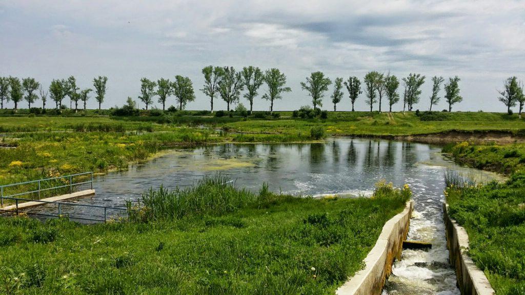 Vegetatia superba din delta