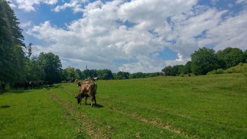 Pasunile de langa Valea Danului