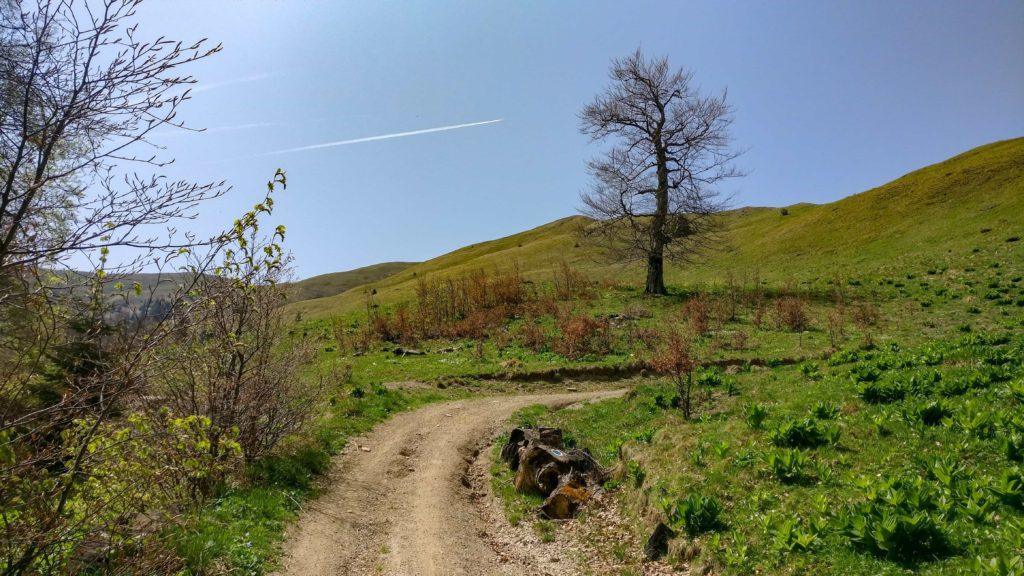 Drumul forestier din Azuga catre platou