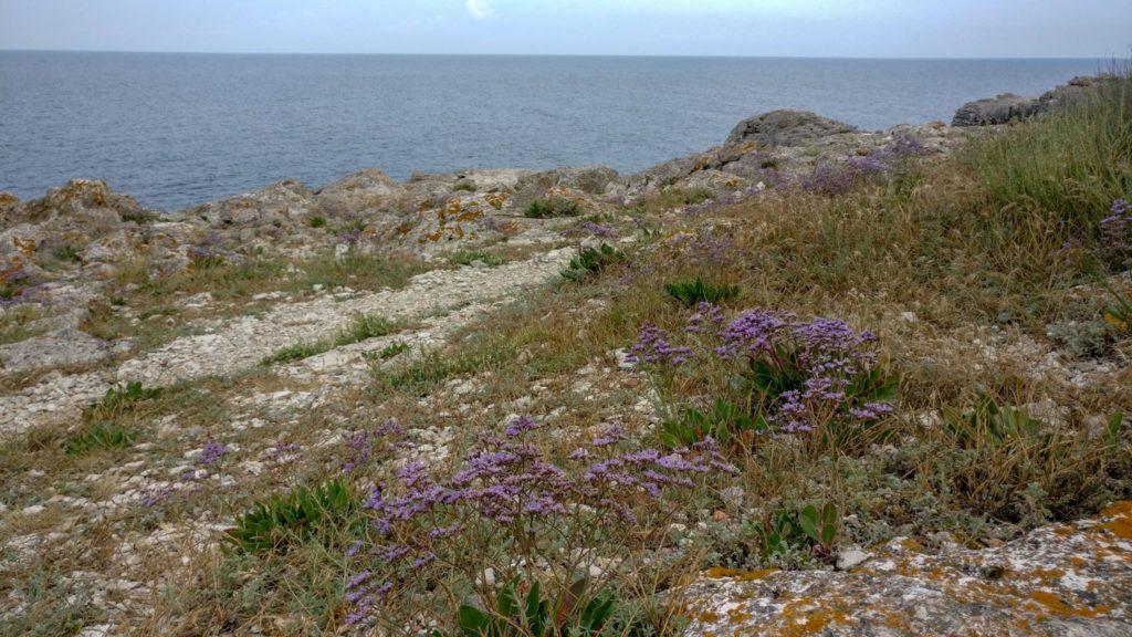 Florile de la Tyulenovo
