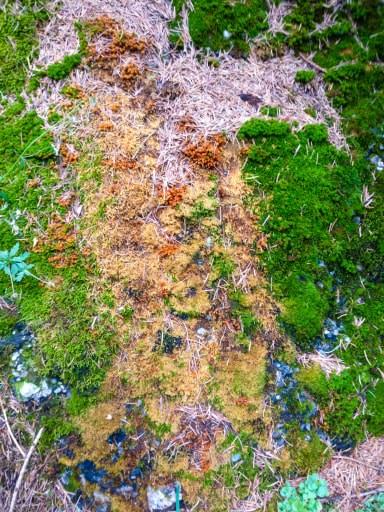 Culorile toamnei, pe pietre