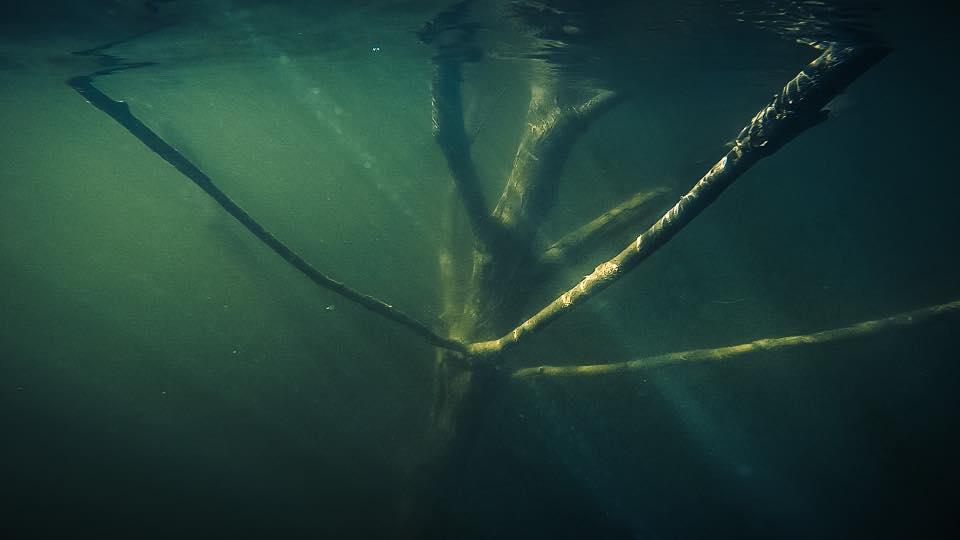 Copacii si stancile vazute de sub apa