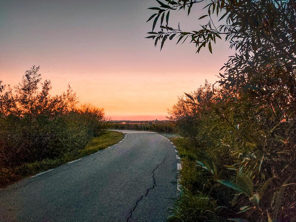 Drumul ce duce spre balta deltei Comana