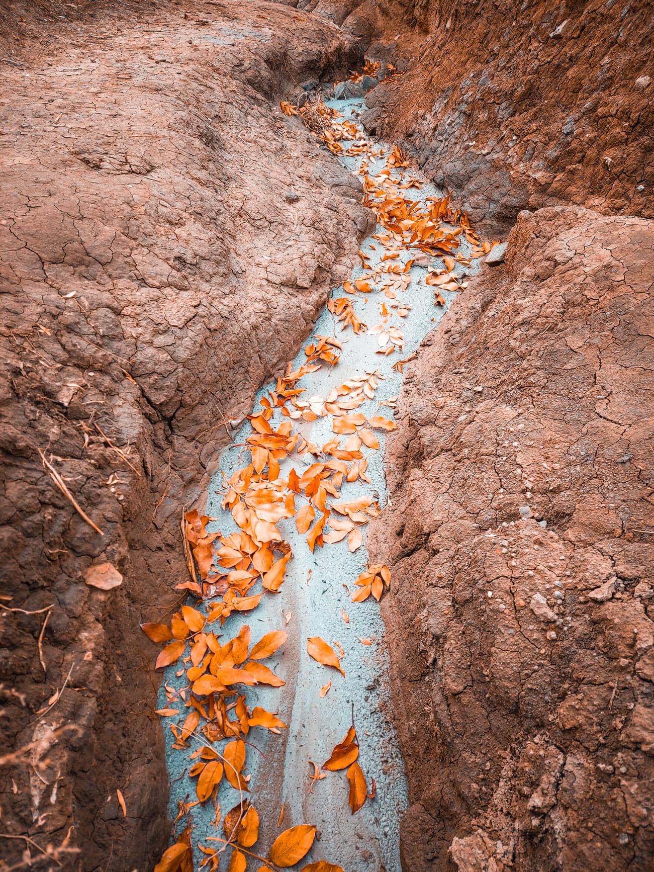 Frunzele cazute pe namolul de la Vulcanii Noroiosi