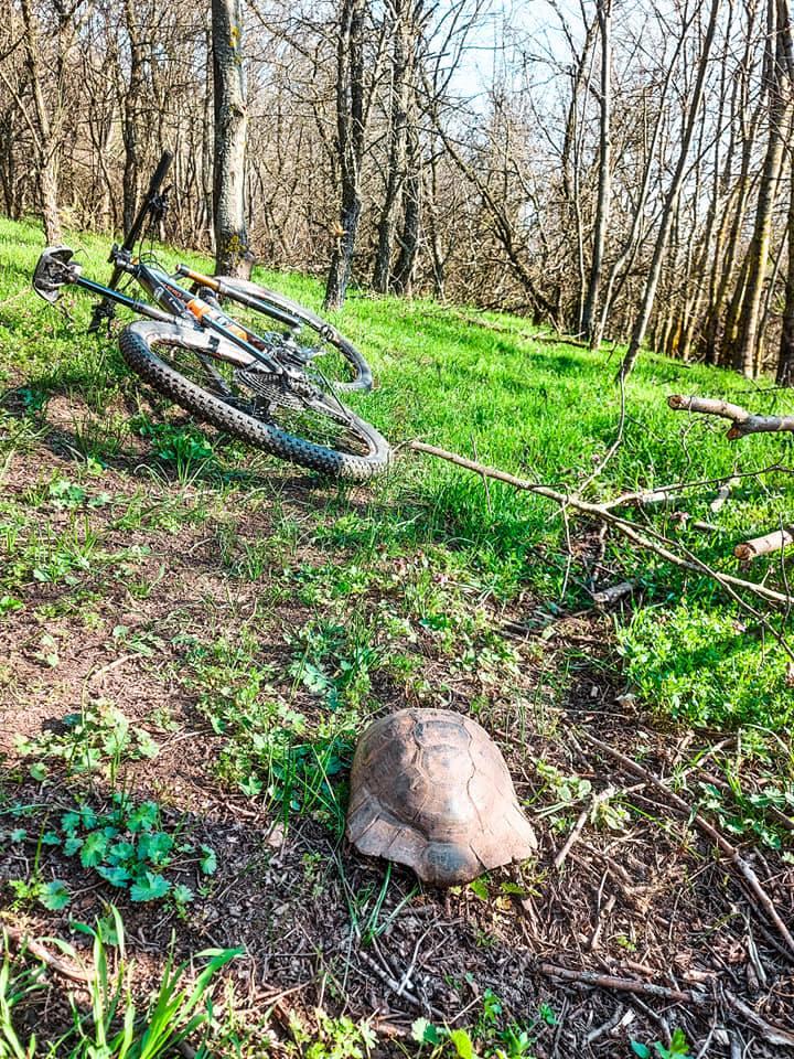 Potecile de MTb sunt pline de țestoase în Măcin